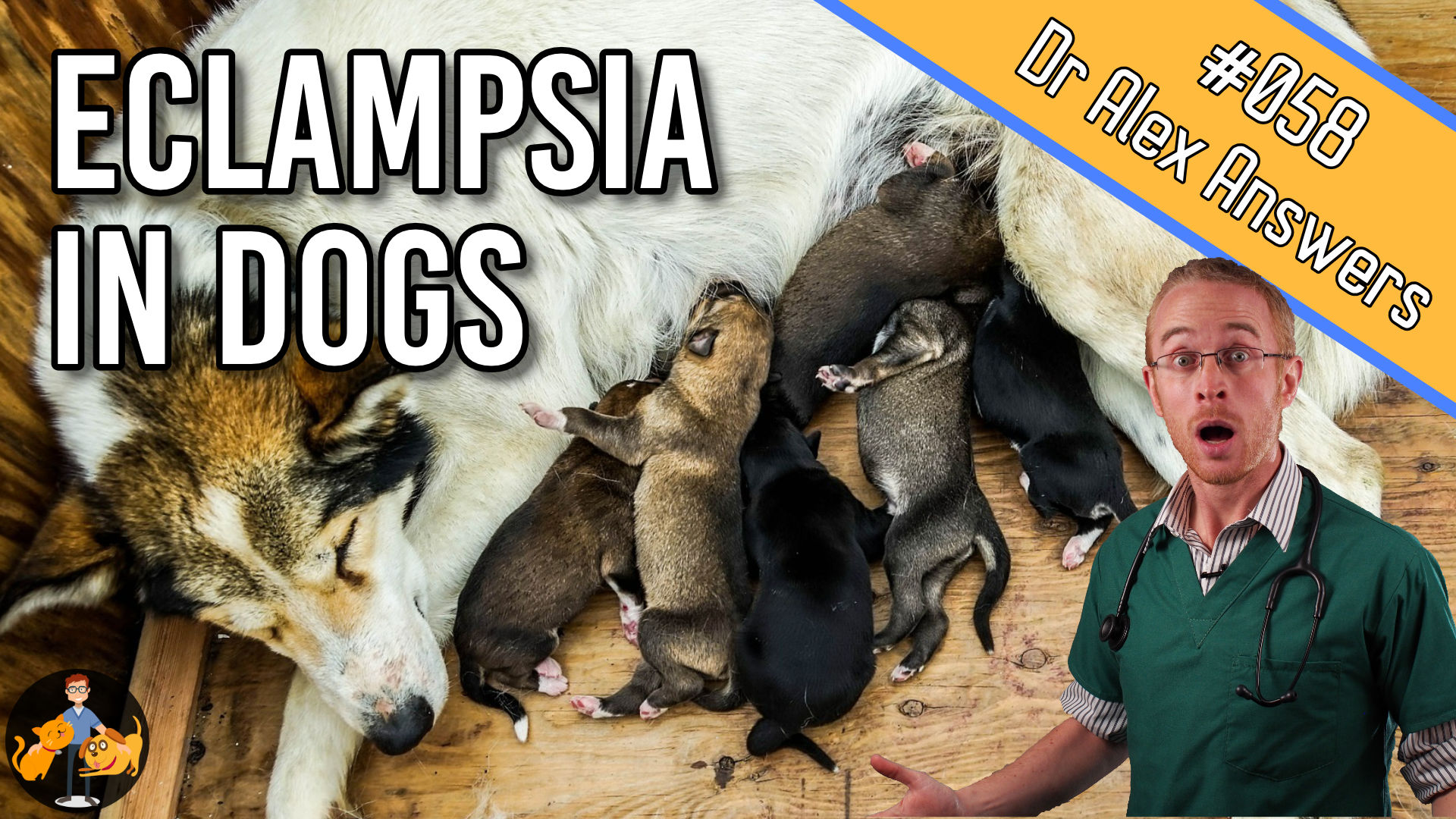 female dog feeding lots of puppies with the title eclampsia in dogs and a picture of Dr Alex with a shocked expression