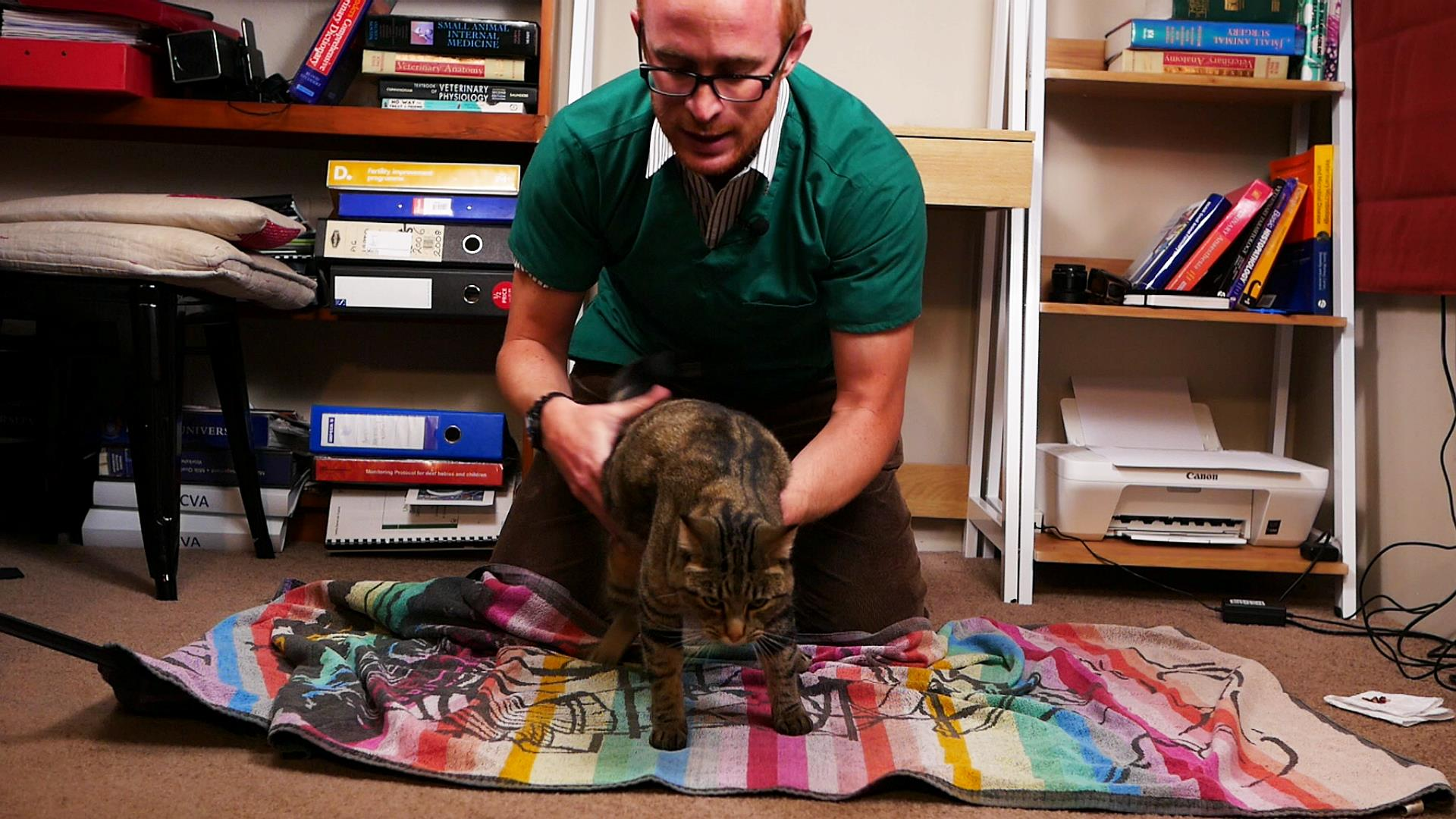 Place your cat in the middle of the towel -