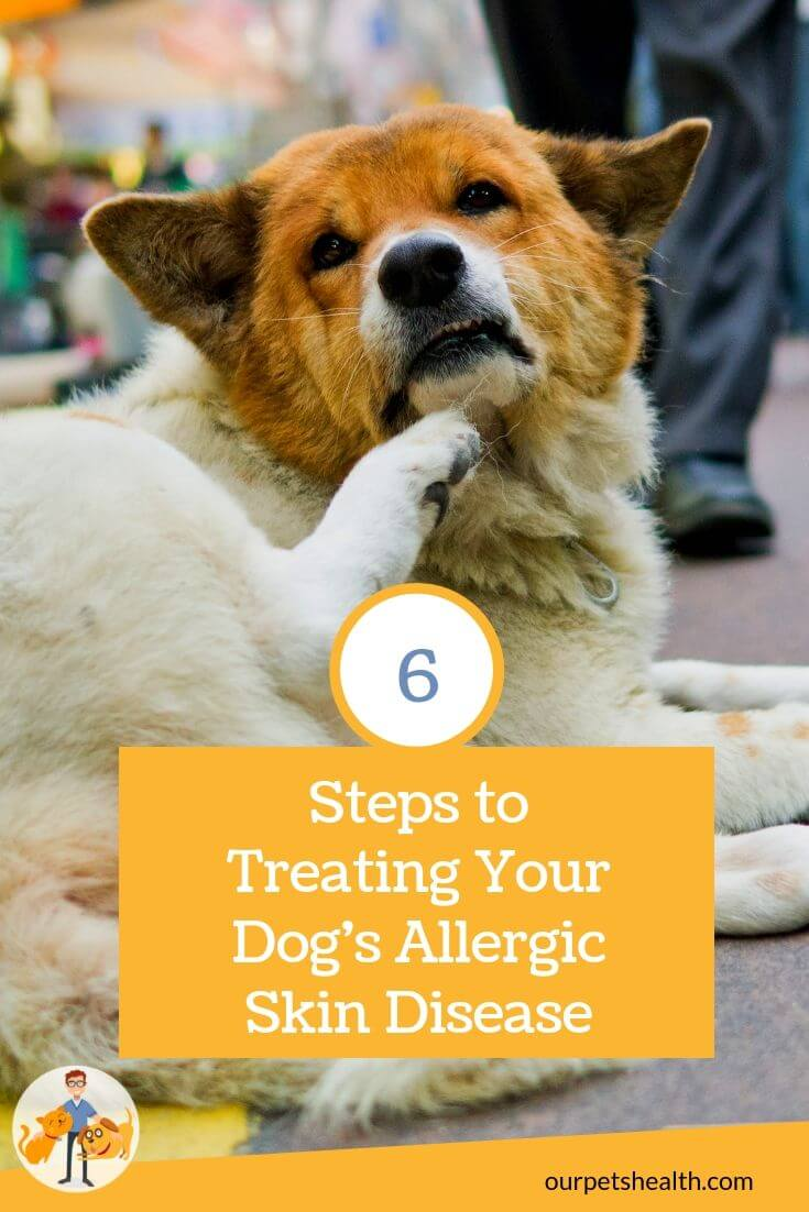 6 steps to treating allergic skin disease in dogs, original image by  Pingz Man