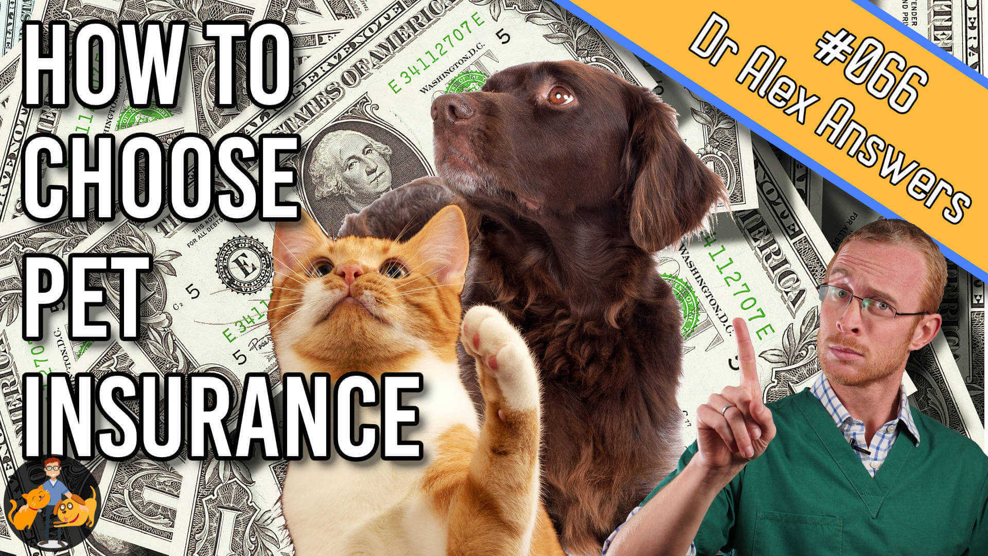 how to choose the best pet insurance with a picture of dollar bills and a dog and cat