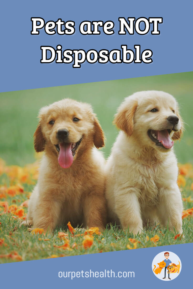 Pets are not disposable, you have a responsibility to them as their owner