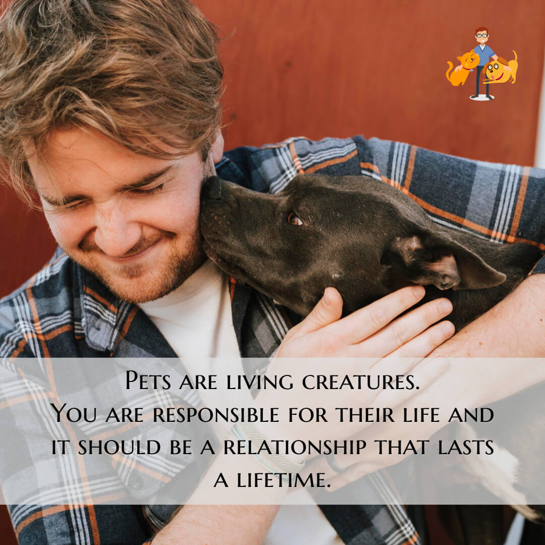 Pets are living creatures.  You are responsible for their life and it should be a relationship that lasts a lifetime.