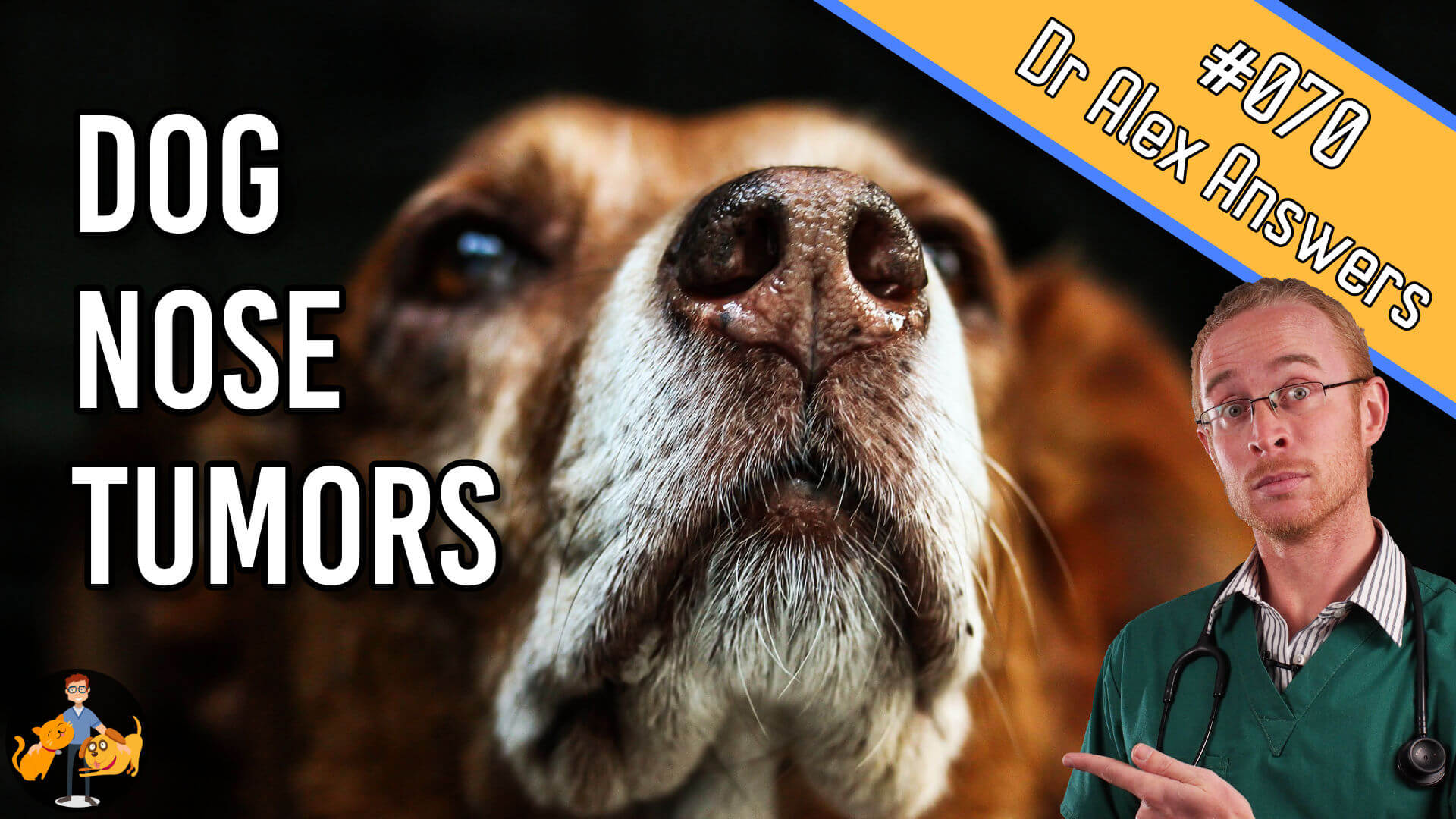 Dog nose tumors - question 70 of the Dr Alex answers show