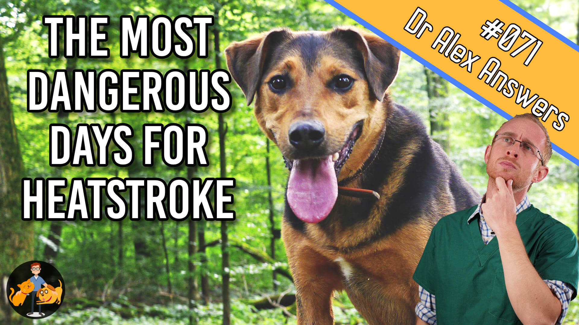 the most dangerous days for heatstroke with a hot panting dog