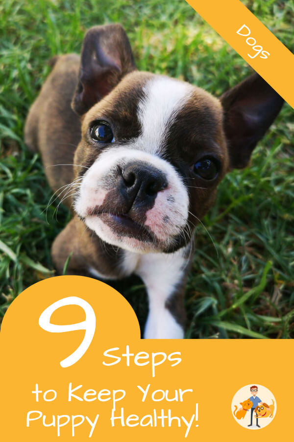 9 steps to keep your puppy healthy