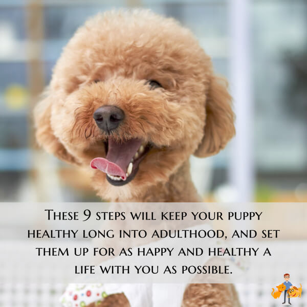 these puppy care steps will keep your puppy healthy long into adulthood