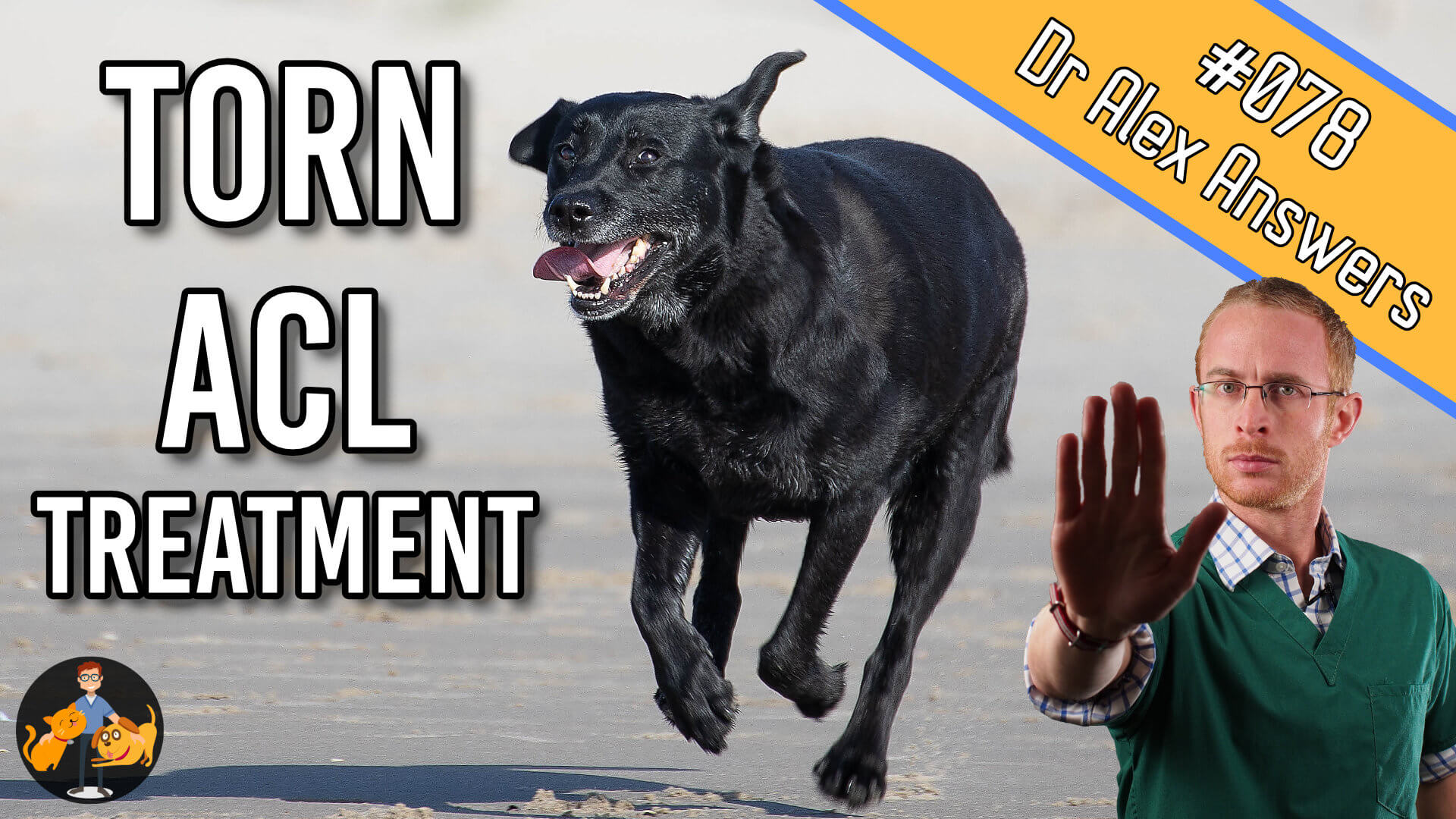 torn ACL treatment in dogs - question 78 of the Dr Alex Answers Show