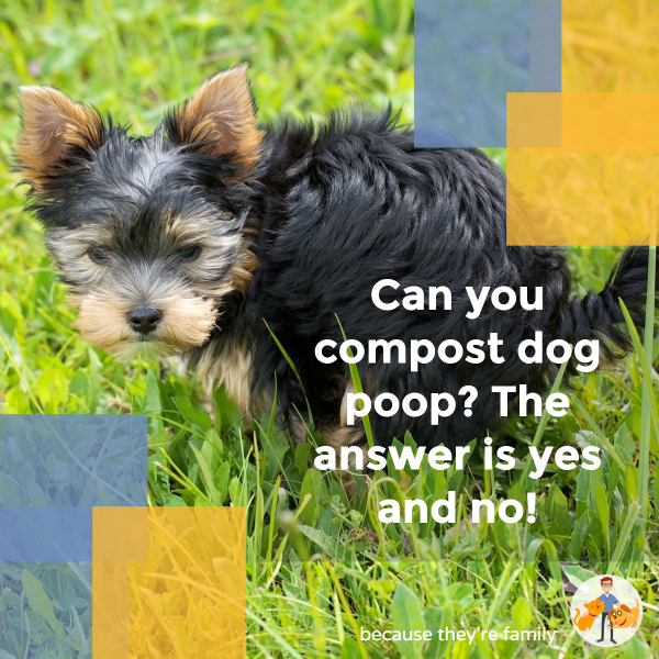 Can you compost dog poop? Yes and no!
