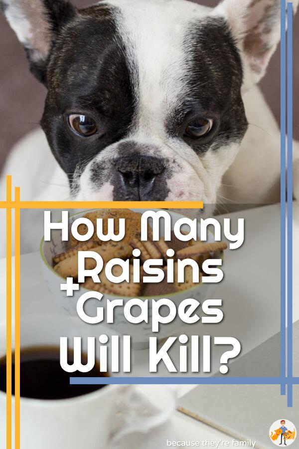 How many raisins and grapes will kill a dog?