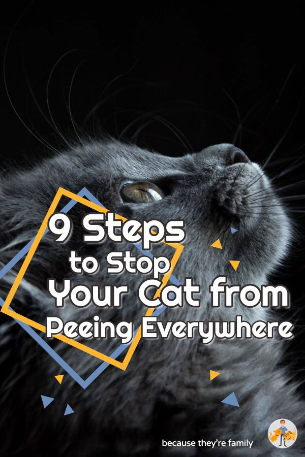 9 steps to stop your cat from peeing everywhere