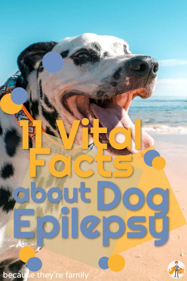 11 vital facts about dog epilepsy