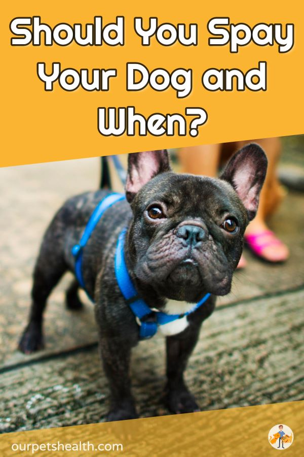 Should You Spay Your Female Dog? and When
