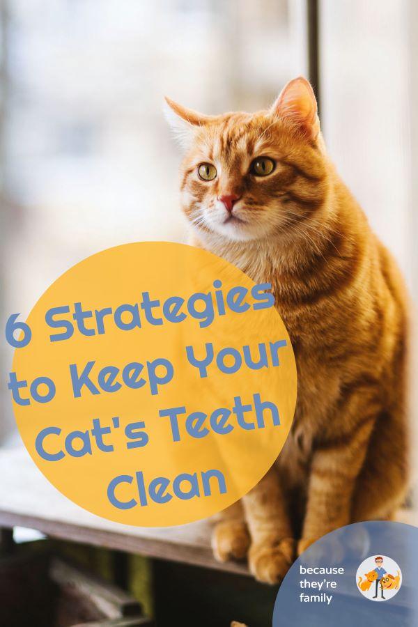 6 strategies to keep your cat's teeth clean