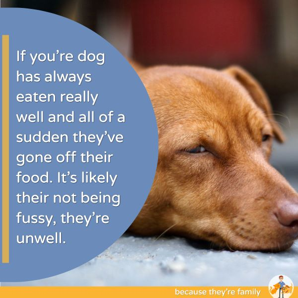 if your dog has always eaten really well and all of a sudden they've gone off their food, it's likely they're not being fussy, they're unwell