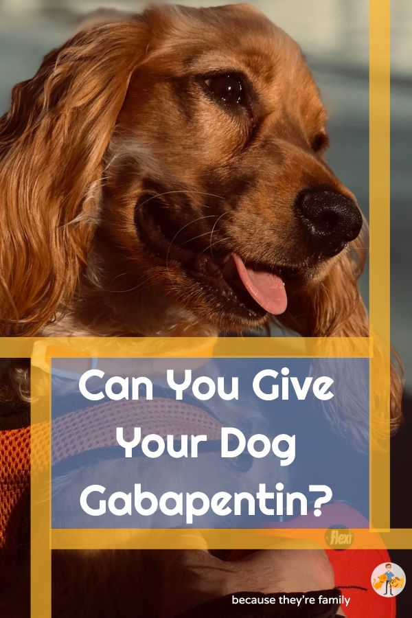 can you give your dog gabapentin?