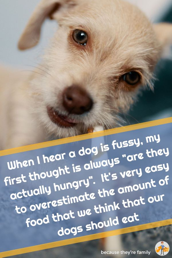 """when i hear a dog is fussy, my first thought is always """"are they actually hungry?"""". It's very easy to overestimate the amount of food that we think our dogs should eat"""