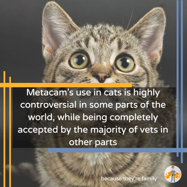 Metacam's use in cats is highly controversial in some parts of the world, while being completely accepted by the majority of vets in other parts