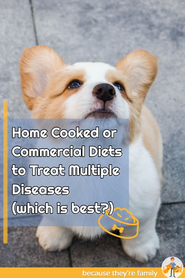home cooked vs commercial diets in a cat with multiple diseases
