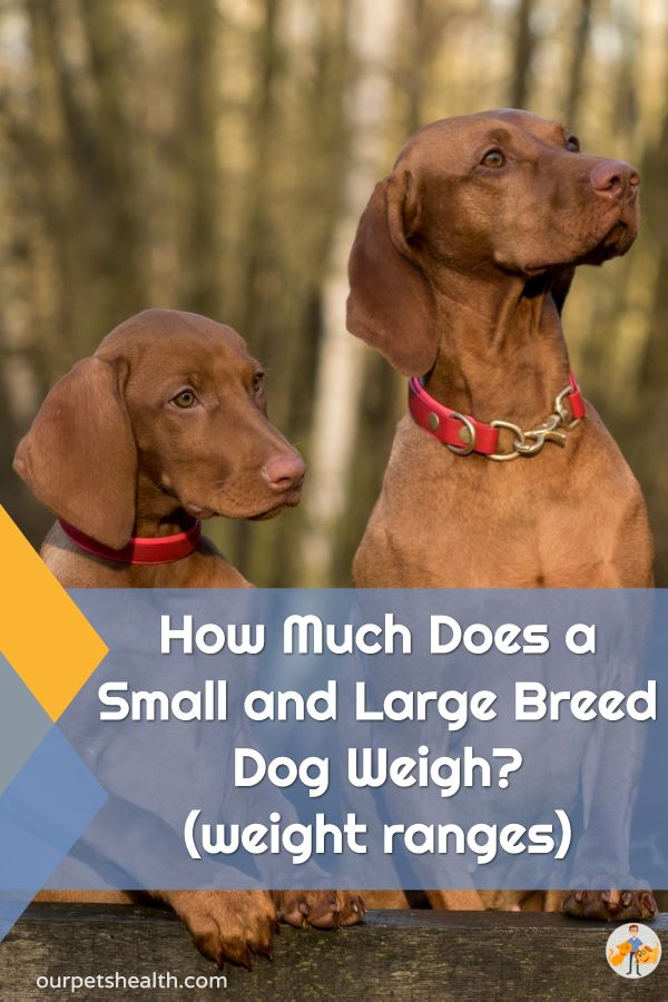 is your dog small or large? How much does a small and large breed dog weigh?