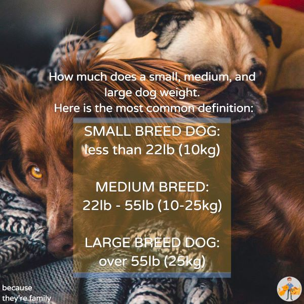 the weight ranges of small and large breed dogs