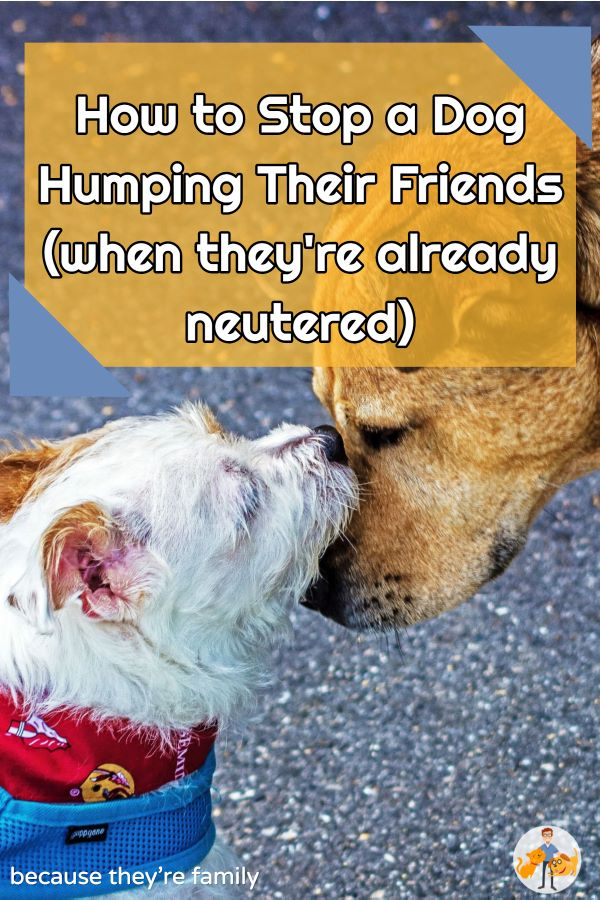 how to stop a dog humping their friends when they're already neutered