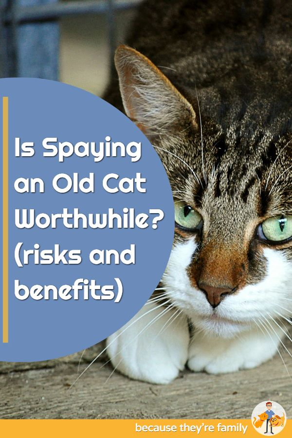 is spaying an old cat worthwhile?