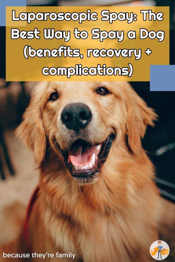 laparoscopy: best dog spay surgery