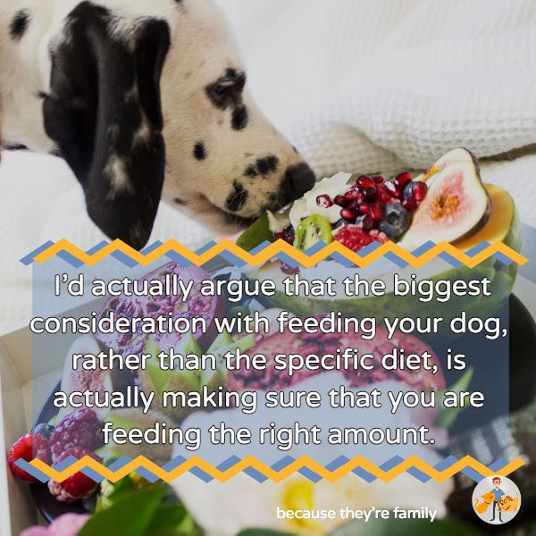 the biggest consideration with feeding your dog is feeding the right amount just as much as the specific diet you're feeding