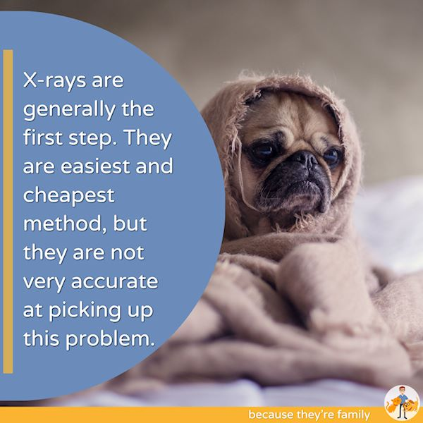 while xrays are often the first step for a dog, they are not very accurate at picking up tracheal collapse