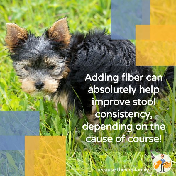 adding fiber to a dog's diet can help improve stool consistency and reduce anal gland impaction