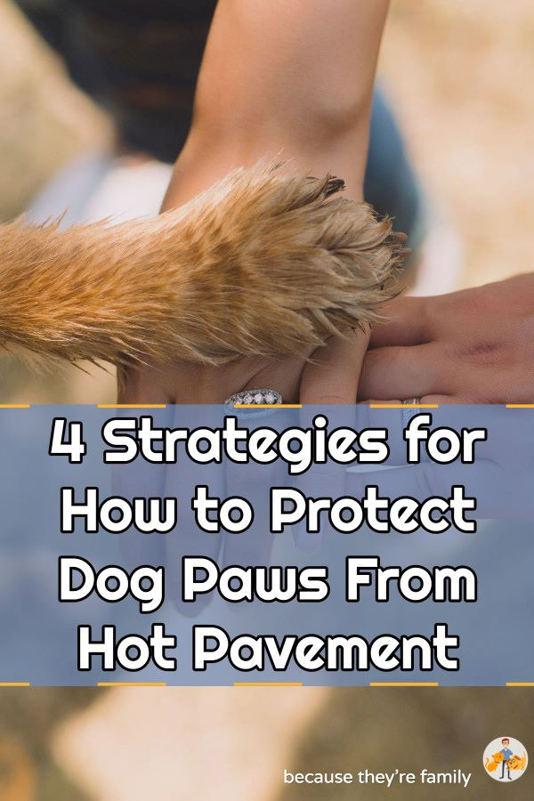 how to protect your dog's paws from the hot pavement in summer