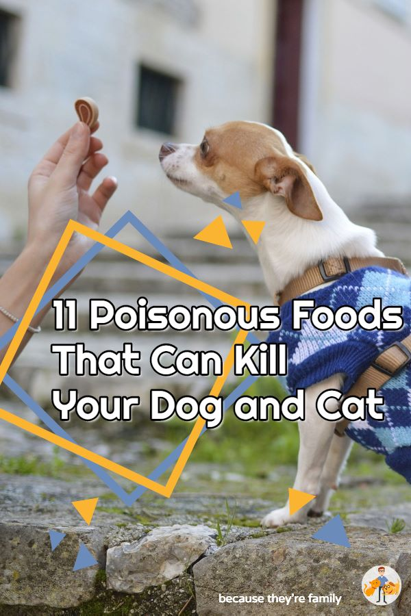 11 most common poisonous foods that can kill your dog or cat