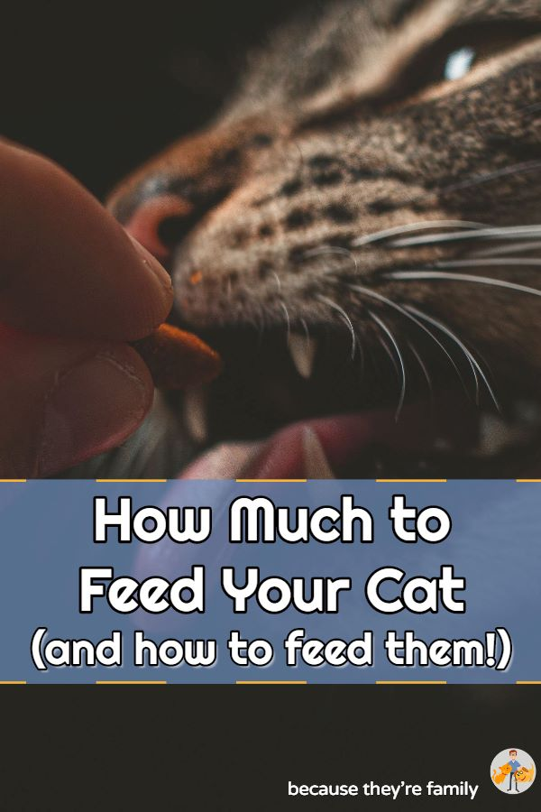 how much to feed your cat and the best way to feed them