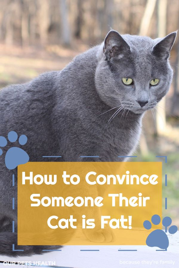how to convince someone their cat is fat