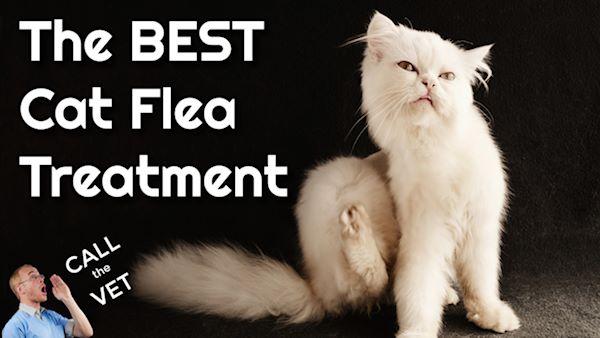 the best cat flea treatment: call the vet