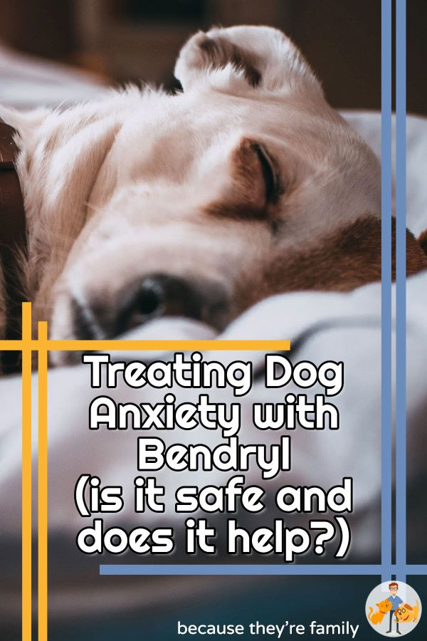 Does benadryl help treat an anxious dog, and is it safe?