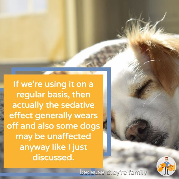the sedative effect of benadryl in dogs tends to wear off over time and some anxious dogs are also unaffected