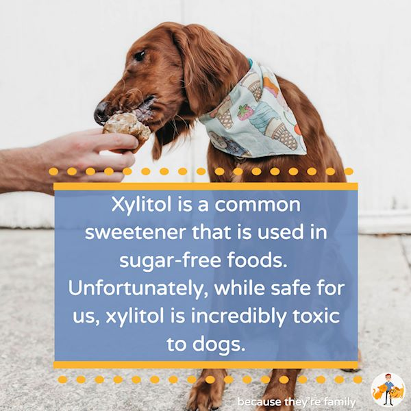 xylitol is incredibly toxic to dogs