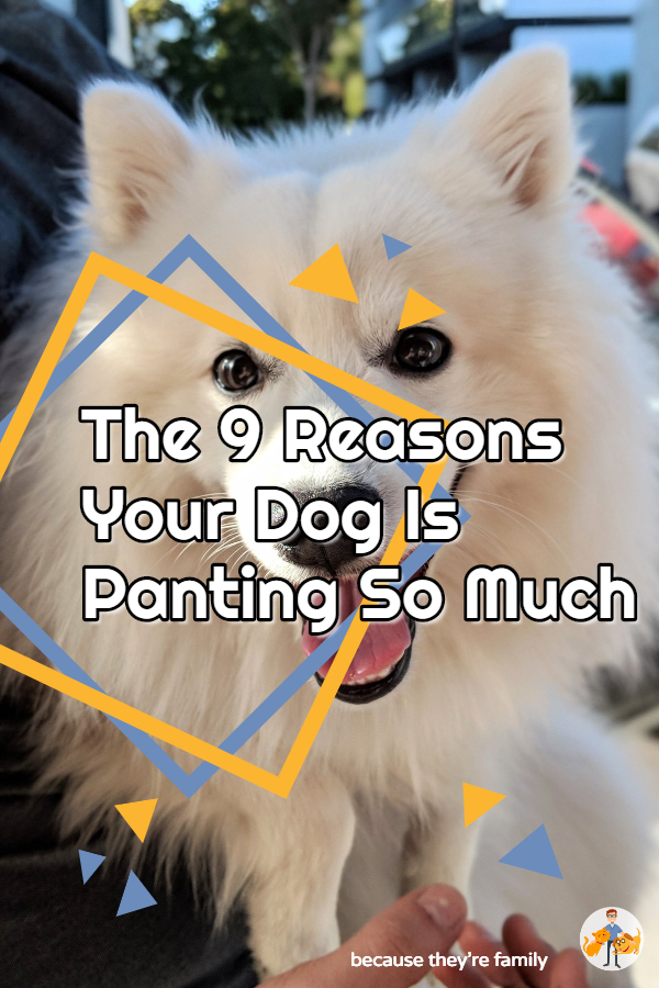 9 reasons why your dog is panting all the time
