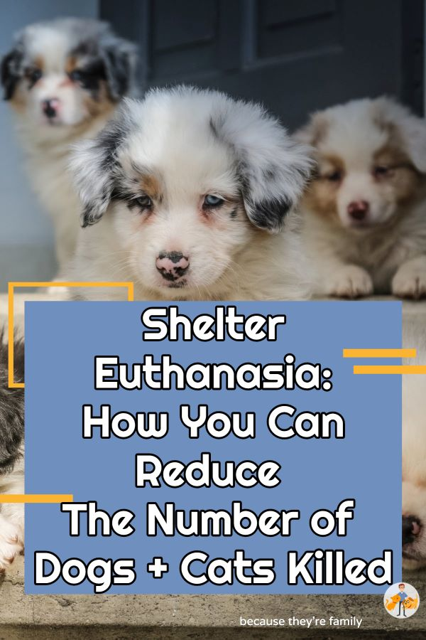 we all have a responsibility to reduce the number of dogs and cats entering shelters and being euthanized