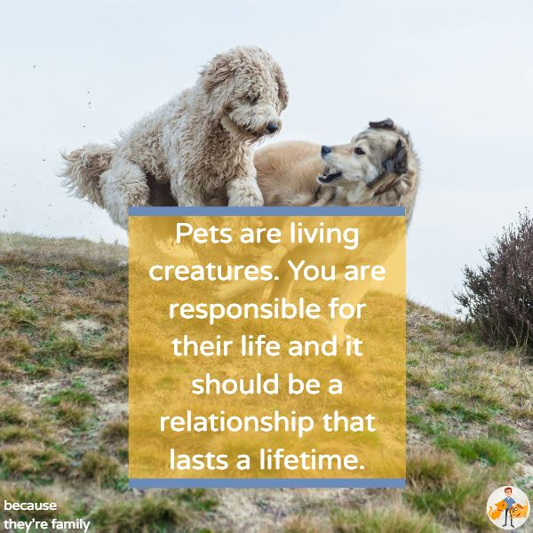 we have a lifetime of responsibility when we bring a pet into our lives