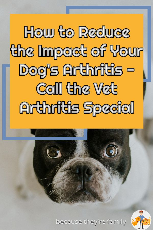 reduce the impact of your dog's arthritis - call the vet podcast special