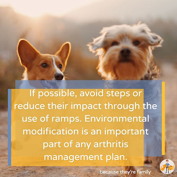modifying a dog's environment is important in any arthritis management plan