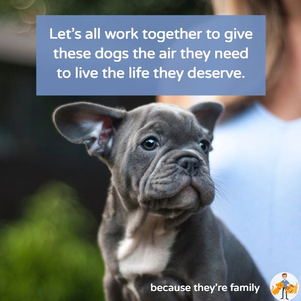 we can only make a change in brachycephalic flat faced dog breeds by all working together