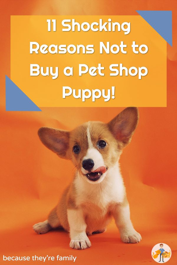 why not to buy a puppy from a pet shop - 11 reasons