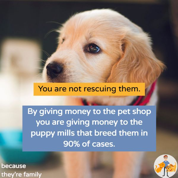 rescuing a pet shop puppy supports puppy mills