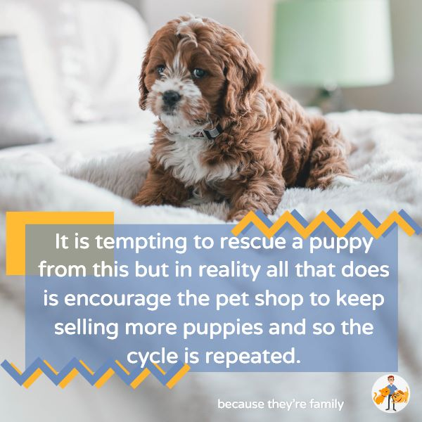 buying a pet shop puppy simply encourages them to sell more
