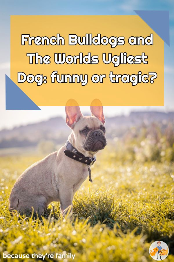 is the ugliest dog in the world funny or tragic?
