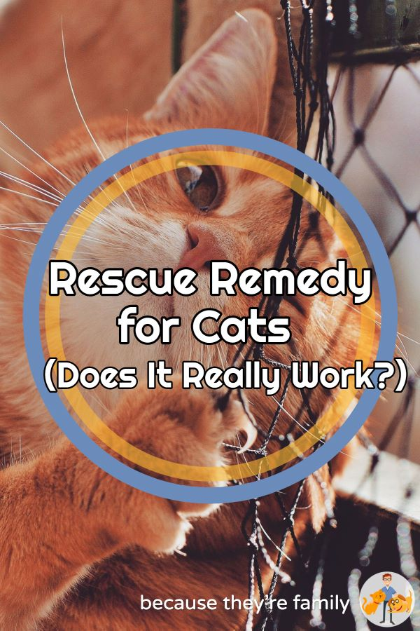 does rescue remedy work for cats?