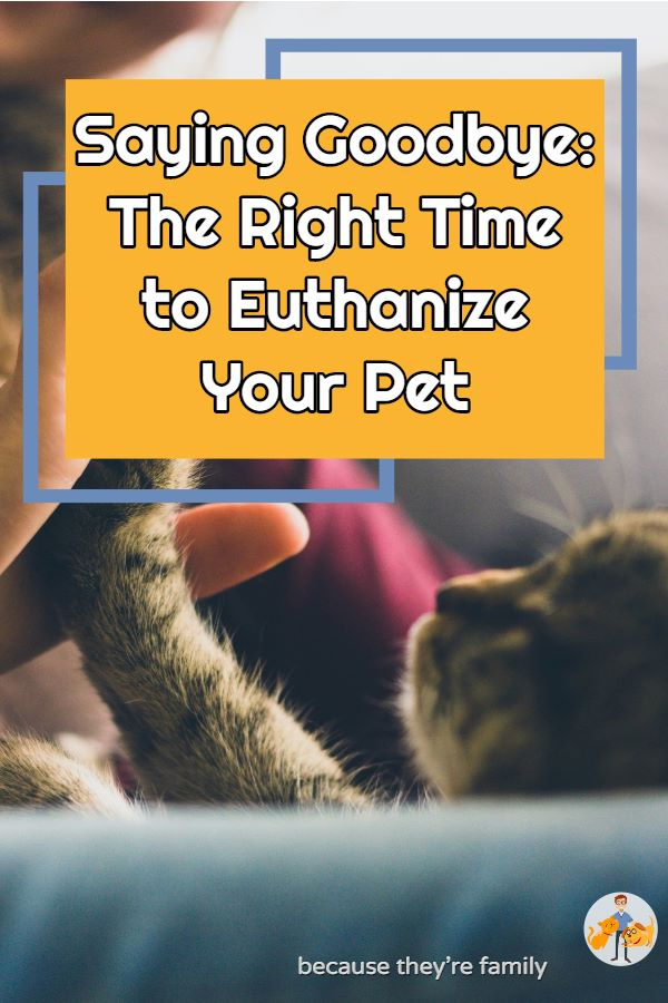 how to know when to euthanize your pet dog or cat